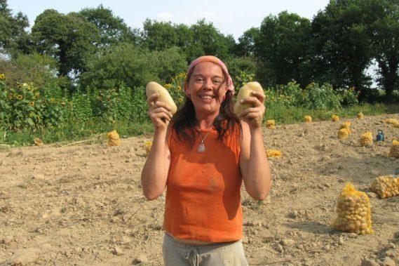 De belles pommes de terre !